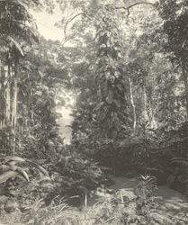 Ceylon [Jungle path]